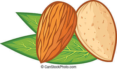 almond with leaves (almond nut)