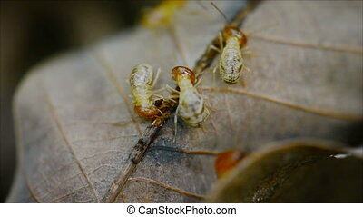 Termites eat the old rotten leaves in the forest close up