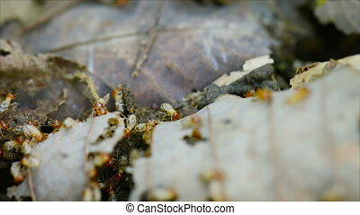 Termites eat the fallen leaves