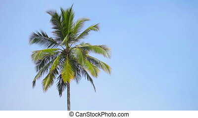 Swaying palm tree