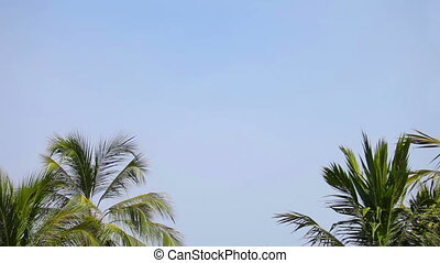 Group of palm trees against a blue tropical day sky