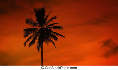 Silhouette of a tropical palm tree - Silhouette of a...