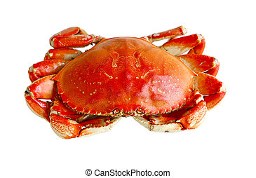 Boiled Crab - Boiled prepared crab isolated on white...