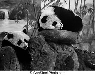 Two lazy pandas Chengdu, Sichuan, China