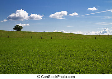 Spring meadow in Bavaria with blue sky
