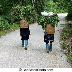 Hmong women in Sapa, Vietnam