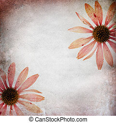Vintage shabby chic background with echinacea