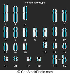 Normal human karyotype which is the diploid pairing of the...