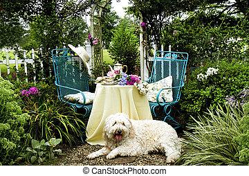 Dog Relaxing Garden Tea