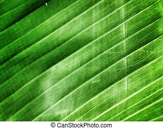 Banana leaves - Green banana leaves background texture