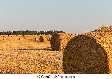 Harvested field with big yellow straw bales