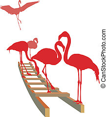 Flamingos on the ladder
