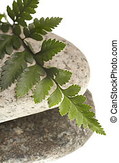 river rocks and fern isolated on a pure white background