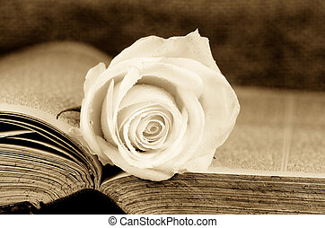 romance - an old book covered with a white rose