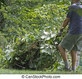 Pulling Weeds - Man dragging a big load of pulled weeds