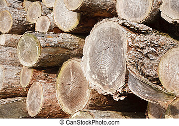 Felled logs - Close up of chopped wood logs stacked in a...