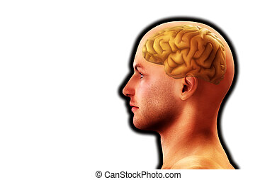 Profile Of Man With Brain 6 - Image of a mans head, for...