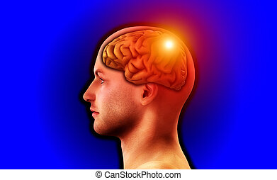 Profile Of Man With Brain 122 - Image of a mans head, for...