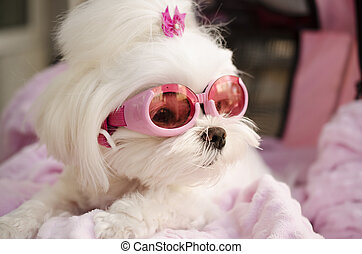 Funny dog pet picture - Funny pet dog wearing goggle sun...