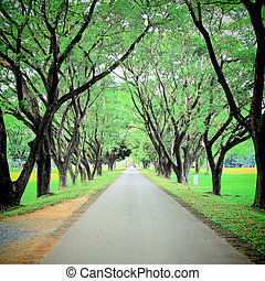 Road through row of green trees wtih retro filter effect