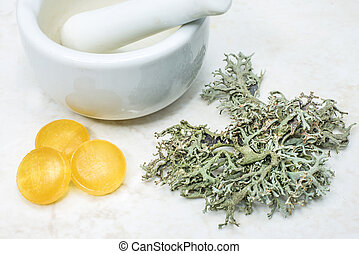 Iceland moss, cough remedy
