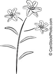 Black and white lily drawing vector illustration.