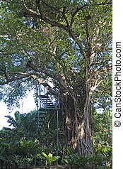 Stairs to Zip Line - Stairs up an old tree to a zip line