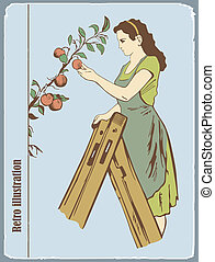 The woman gathers apples