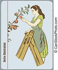 a, mulher, dobras, maçãs