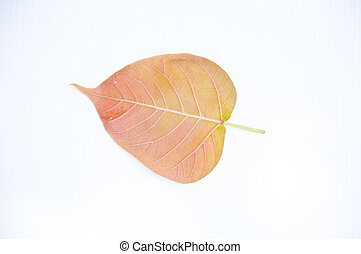 Bodh tree leaf on white background