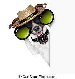 safari dog