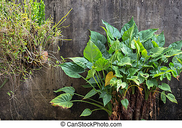 home garden - green plant and orchild at wall