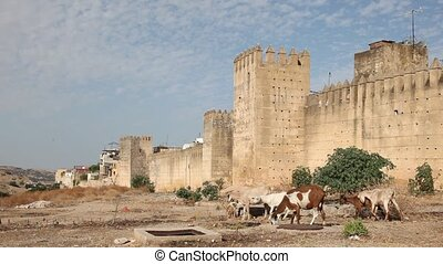 Goats in Fes, Morocco - Goats at the wall of ancient medina...