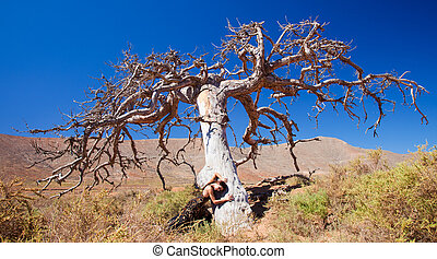 flamenco and a dead tree - art, life, and death