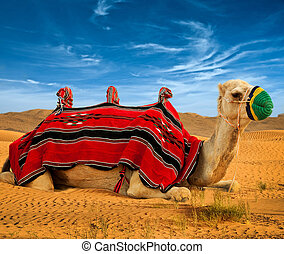 Tourist camel on sand dunes in the desert