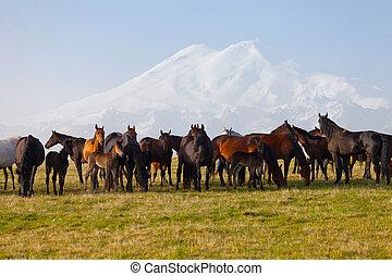 Herd of horses on a summer pasture. Elbrus, Caucasus,...
