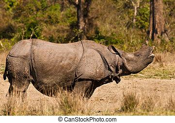 Rhino mating call