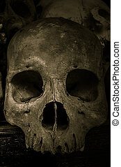 killing fields cambodia - skull from killing fields cambodia...