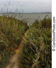 narrow path to the sea of reeds