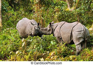 Rhino fighting