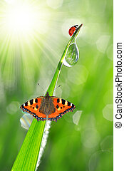 fresh morning dew with ladybird and butterfly