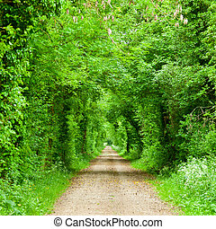 Green tunnel road - Scenic road through green forest in...