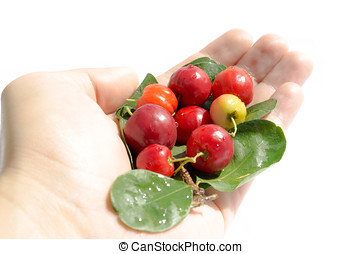 Small Fruit, Micro Fruit - small red fruits on hand. green...