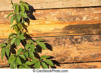 fából való, zöld, elágazik, háttér