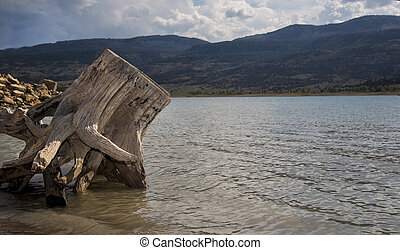 Joes Valley Reservoir - Driftwood on the shore at Joes...