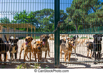 Dog shelter in Spain - Dogs behind a closed fence in Spanish...