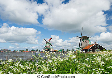 Windmills at Dutch Zaanse Schans - Wild flowers in front of...