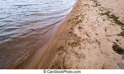 Water plant in sand and waves Shot to RAW, wide dynamic...