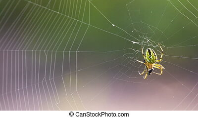 Extreme closeup of spider and web Shot in RAW, wide dynamic...