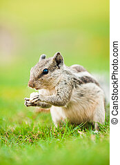 squirrel feeding with natural background